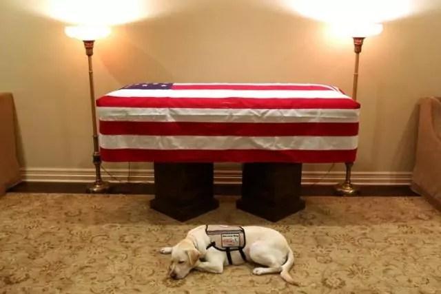 Il cane Sully davanti alla bara del padrone, il 41esimo presidente Usa George H. W. Bush.