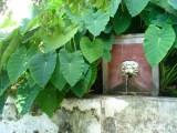Giardino della Minerva, la fontana della Gorgone (foto Giardino della Minerva).