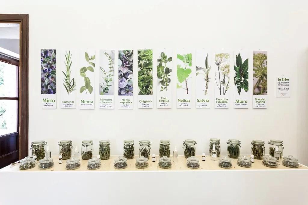 Collezione di erbe officinali del Museo vivente della dieta Mediterranea di Pollica (copyright Antonio Riccio).