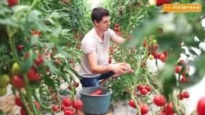 Agricoltura, UE lancia la giornata della produzione biologica