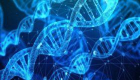 Workshop: i 12 strati del DNA