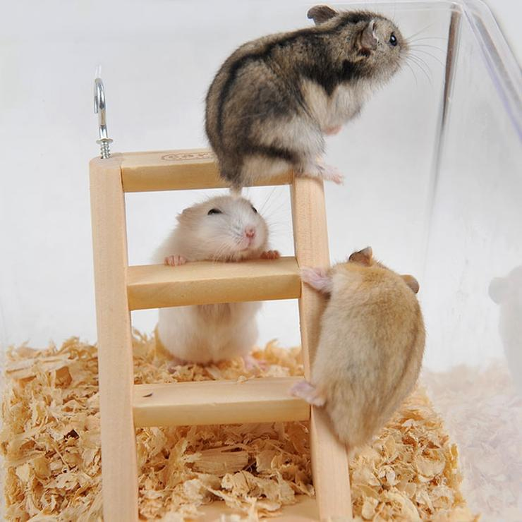 Toy ladder for hamster 🐁 Small Animal Cage - Hanging Ladder with Hook 1pc 15*7*2cm | Little pet criceto