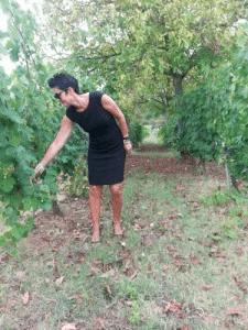 Bocelli wijnen