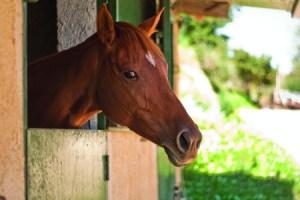 Roccadia cavallo
