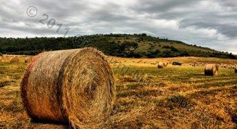Credito senza 'crunch' per le aziende agricole