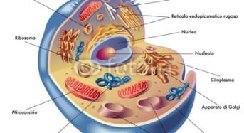 Il supermicroscopio 2.0 mostra nuovi dettagli nella cellula