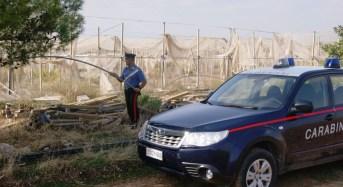 Giarre.  Sequestrata piantagione di oppio e canapa indiana: in manette un insospettabile