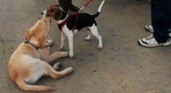 Ragusa. Associazioni animaliste ed ambientaliste rammaricate dopo bocciatura Regolamento tutela diritti animali