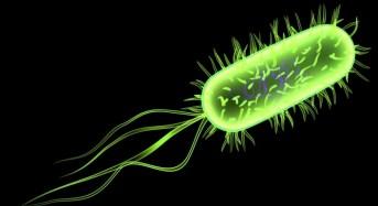 Allerta in Europa per nuova epidemia di E coli in Francia
