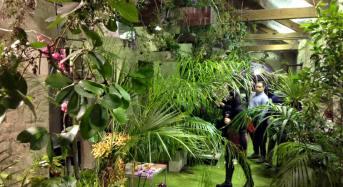 """Modica. Bilancio positivo per il primo week-end della """"Casa delle Farfalle"""" inaugurata a Modica. Centinaia di visitatori suggestionati dal volo di numerosissime farfalle tropicali."""
