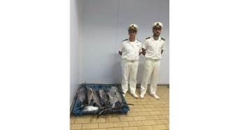 Controlli sulla filiera della pesca della Guardia Costiera di Pozzallo