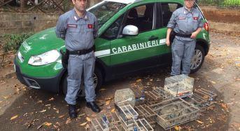 Mercato di Ballarò, sequestrati 60 esemplari di avifauna protetta