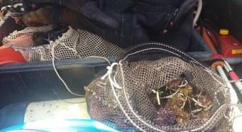 Punta Secca, pesca 400 ricci di mare.  4000 euro di verbale