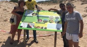 Protezione delle dune di Cammarana, installati i pannelli divulgativi
