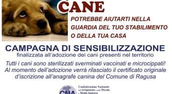 Randagi alla zona artigianale di contrada Mugno a Ragusa. CNA avvia campagna di sensibilizzazione per l'adozione di uno o più cani