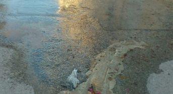 """Marina di Ragusa. Perdita d'acqua in via Ancona. Nicita: """"Marina si merita altra amministrazione"""". Riceviamo e pubblichiamo"""