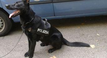 Un arresto a Mirandola per detenzione a fini di spaccio di sostanze stupefacenti