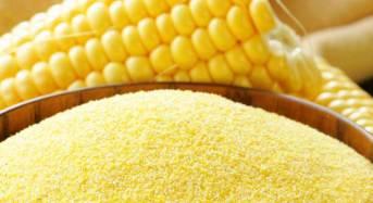 Micotossine oltre i limiti: richiamati due lotti di farina di mais del marchio Vitali. Allerta pubblicata sul sito del Ministero della Salute!