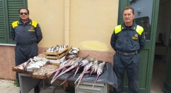Palermo. Interventi volti alla tutela dei mercati e delle risorse ittiche protette