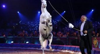 Palermo come Montecarlo con il favoloso Circo di Lidia Togni