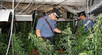 Da Palermo a Misilmeri per coltivare la sua piantagione indoor: 24enne arrestato dai carabinieri