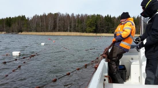 Vajaasti hyödynnetyt kotimaiset kalalajit voivat auttaa Itämerta toipumaan ja