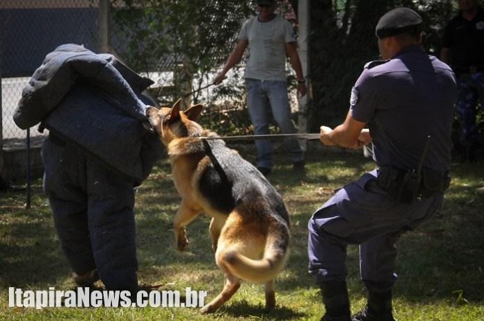 Cães passaram por diversos treinamentos