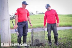 Job e Luciano recolheram animal