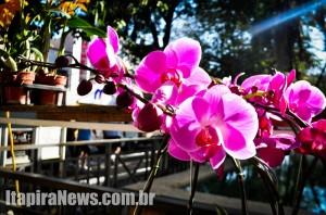 Evento prevê concurso de orquídeas e palestras