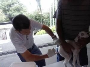 Cães e gatos foram vacinados em duas etapas (Divulgação)