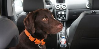 Cuidados devem ser observados ao transportar cães e gatos em carros (Ilustração)