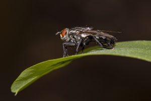 proteggersi insetti