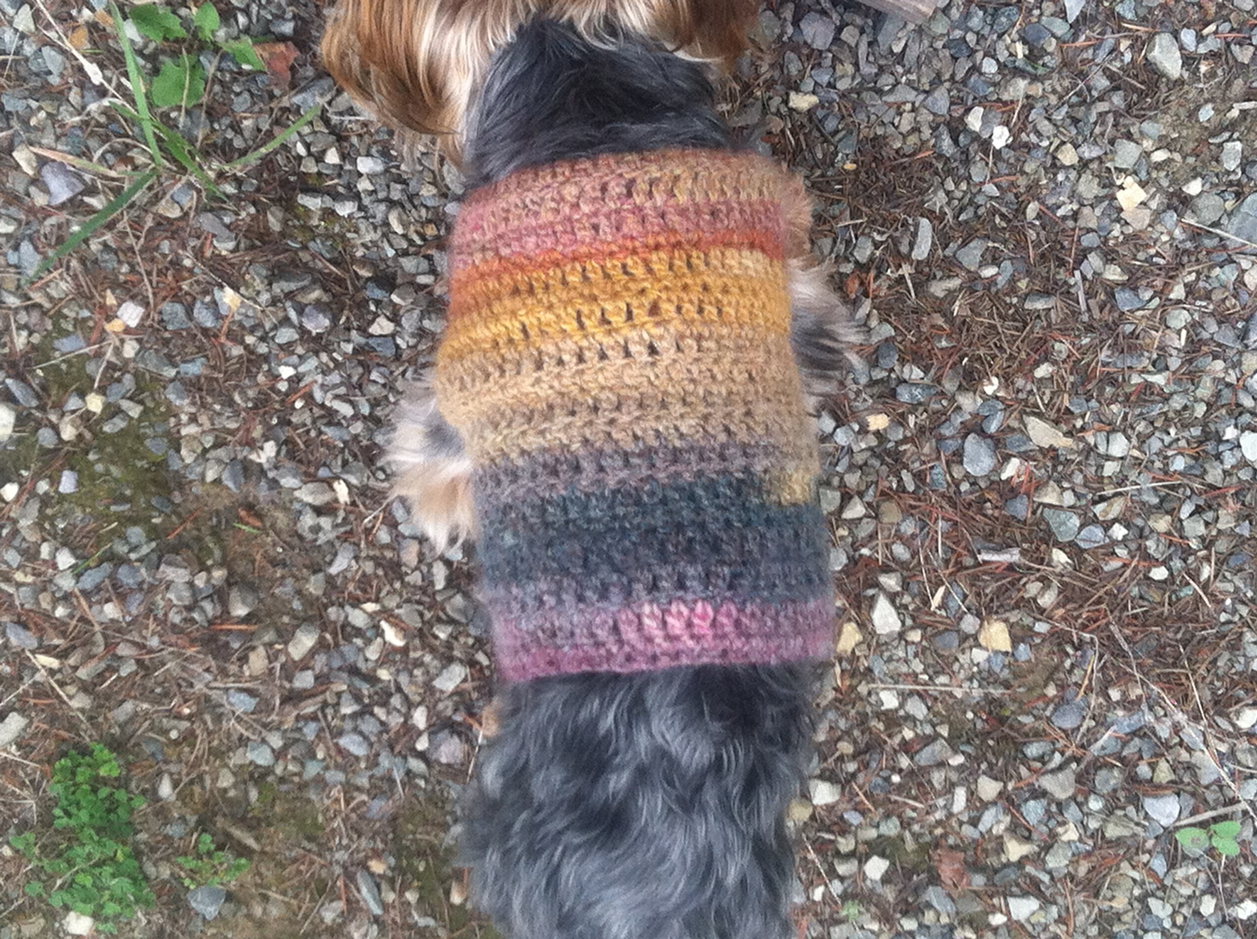 Free quick and easy small dog crochet sweater itchin for some back part of dog sweater bankloansurffo Image collections