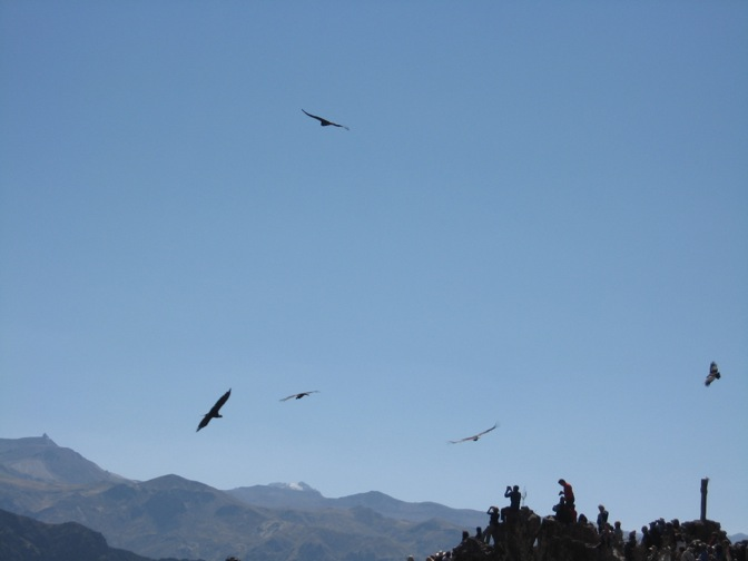 Colca Canyon, Peru - Condor Crossing