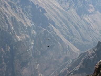 Condor Crossing, Colca Canyon, Peru