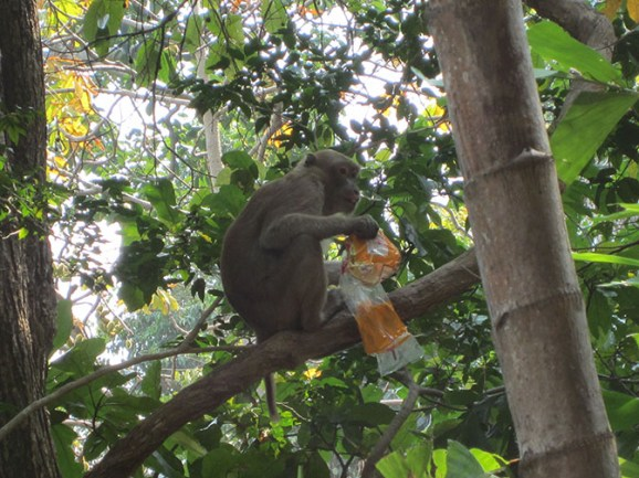 Monkey with stolen goods