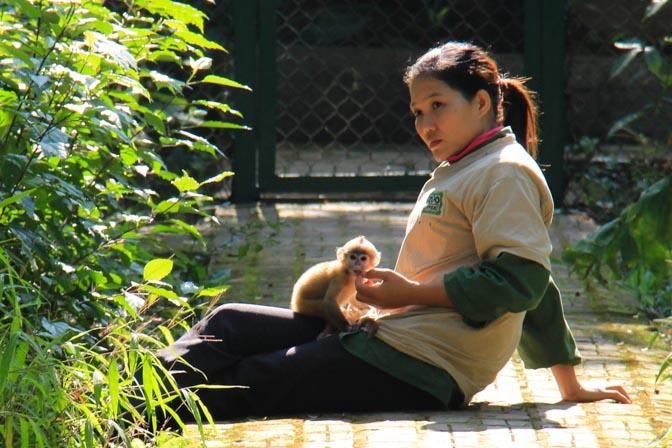Endangered Primate Rescue Center, Cuc Phuong National Park, Vietnam