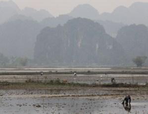 Snail hunters in Vietnam.