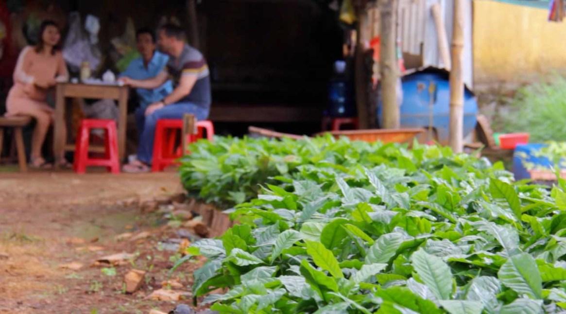Dak Lak coffee nursery