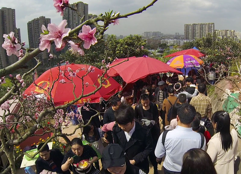 Walking the path at the Longquan Peach Blossom Festival