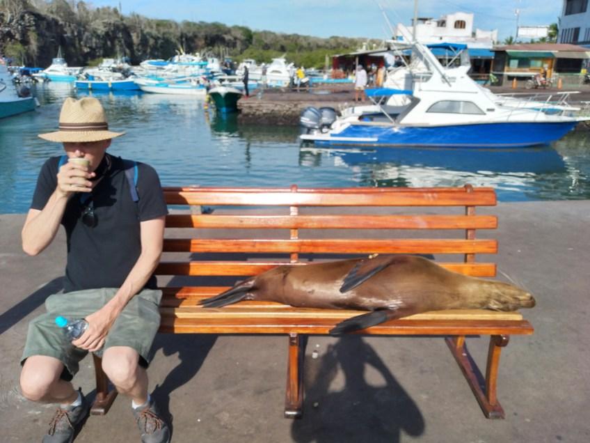 sea lion and galapagos tourist