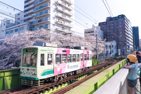 Viewers enjoying blooming cherry tree at Gakushuinshita station, Tokyo. Pictured the background: dense urban fabric and train infrastructure.