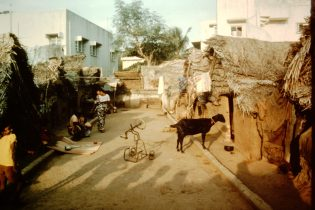 People and goat in Madras slum