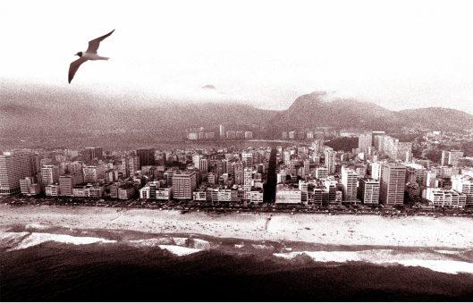 Bird flying over Rio de Janeiro beach