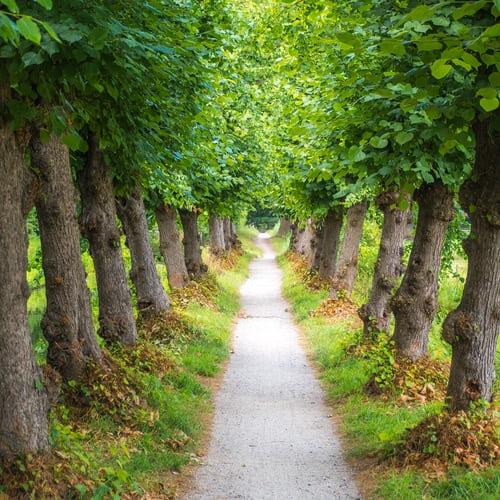 Autorisations d'urbanisme : Attention à la protection des allées et alignements d'arbres !