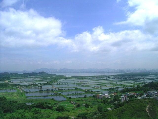 Fishponds at Yuen Long seen from Ah Kai Shan 丫髻山