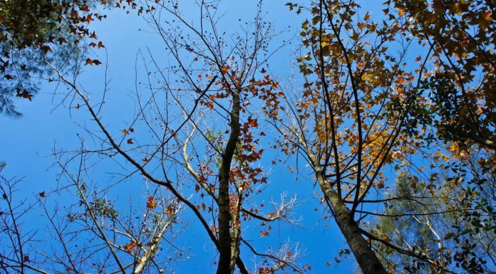 Watch maple in Tai Lam Country Park around Winter Solstice in Hong Kong