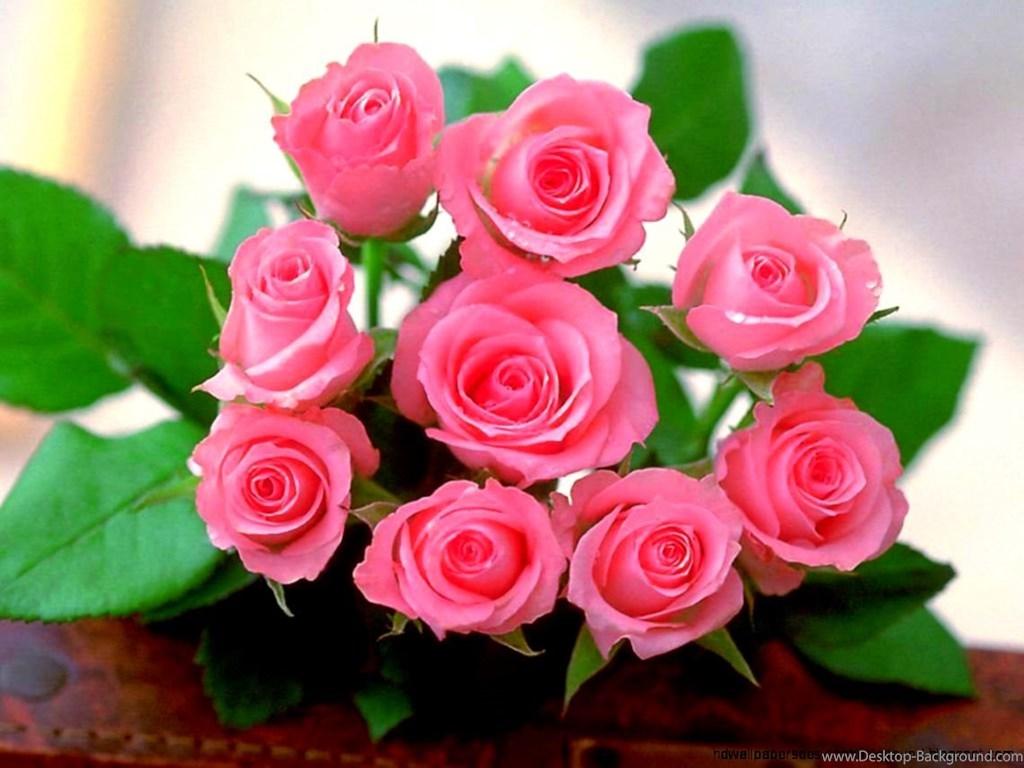 Free Download Rose Flower Wallpaper For Mobile Pink Rose Images Wallpaper Download 1884532 Hd Wallpaper Backgrounds Download