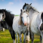 White And Black Horse 5k Wallpaper Horses In The Meadow 1892221 Hd Wallpaper Backgrounds Download