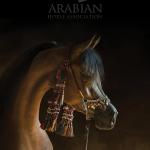 Arabianhorses Org Aha Backgrounds Arabian Horse Wallpaper Iphone 1894132 Hd Wallpaper Backgrounds Download